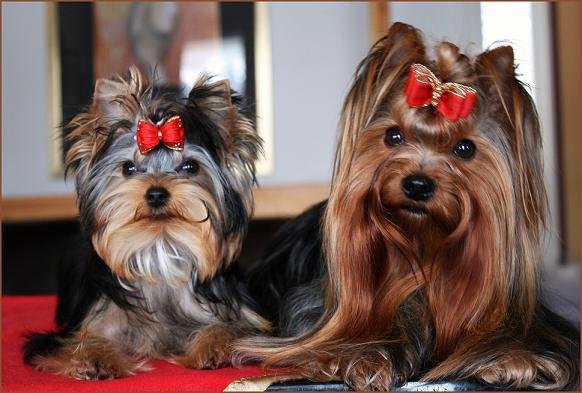 Minnie ja Ronnie