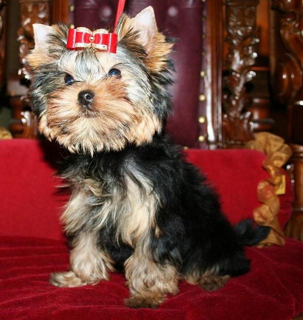 Magic Minidog Born To Party