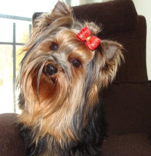 Magic Minidog Sweet Little Pearl- Helmiina
