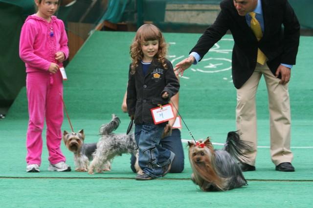 lapsi koira kilpailu