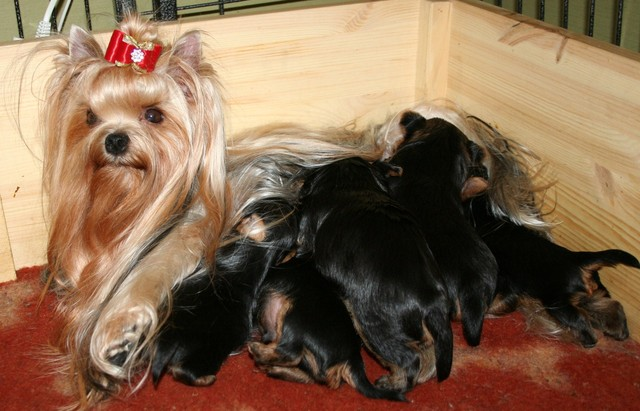 Durreri & first puppies