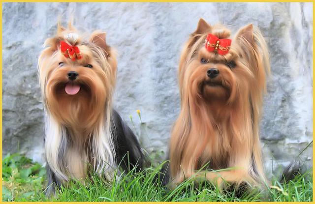 Minnie & Ronja