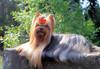 Magic Minidog Pretty Me Ronia-Ronja