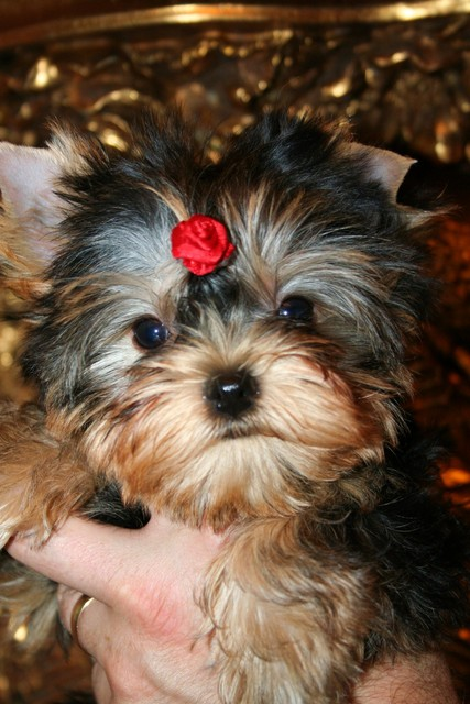 Magic Minidog My Little Baby