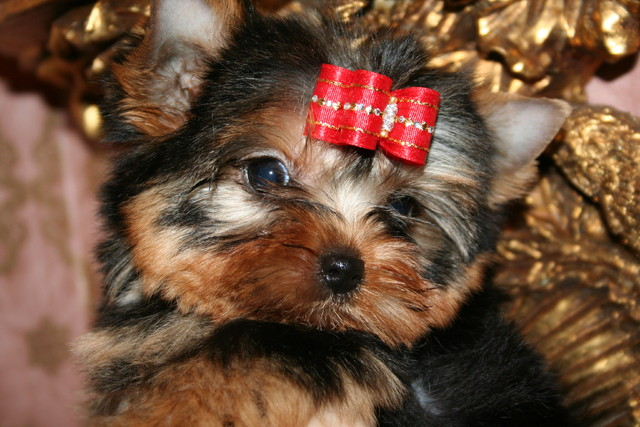 Magic Minidog Dream On