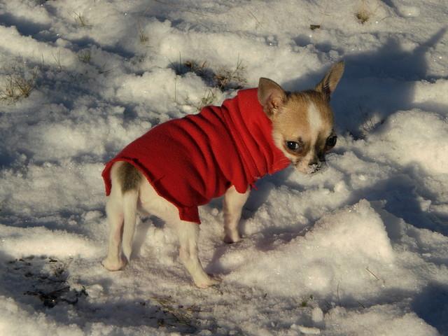 Magic Minidog Fanny Toy -Brutus