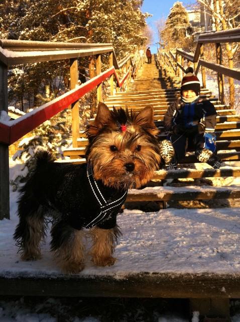 Magic Minidog Daniella joulu