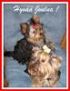 Hyvää Joulua -Magic Minidog Daisy of Love