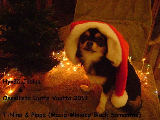Magic Minidog Black Samantha -Pippa