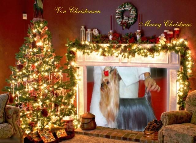 Von Christensen yorkies -Merry Christmas