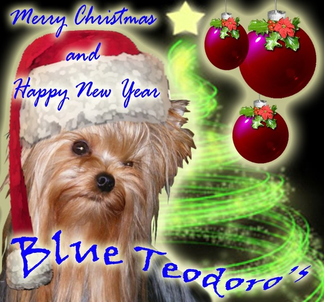 Merry Christmas -Blue Teodoro`s
