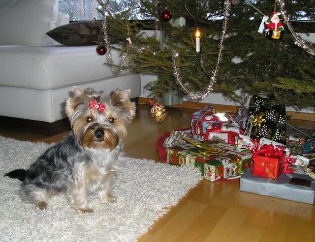 Hyvää Joulua ! Toivoo Ansa