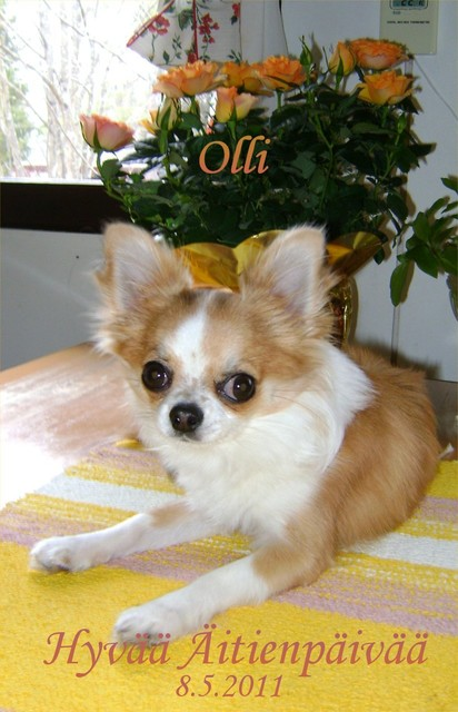 "Magic Minidog All Sweet - "" Olli """