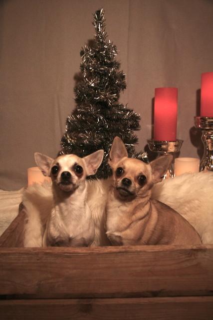 Hyvää Joulua ! T. Ninja ja Nala
