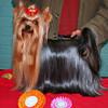 29.10.11 Seinäjoki International Dogshow