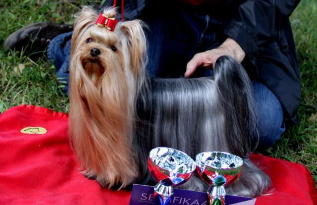 Magic Minidog Love Story Fin Ch,owner: Marja Järvi