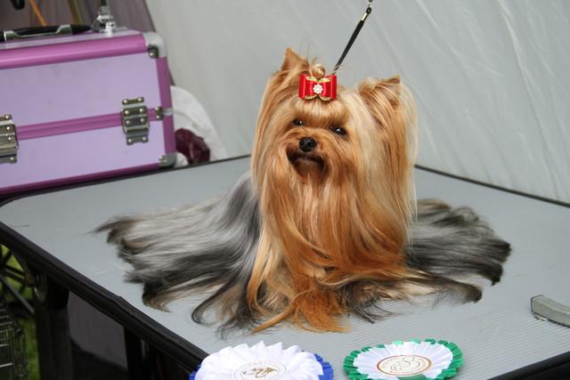 Fleur Estonian Champion
