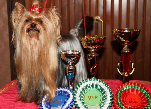 Yorex Jolie Fleur Fortune z Kernikady Finnish Champion