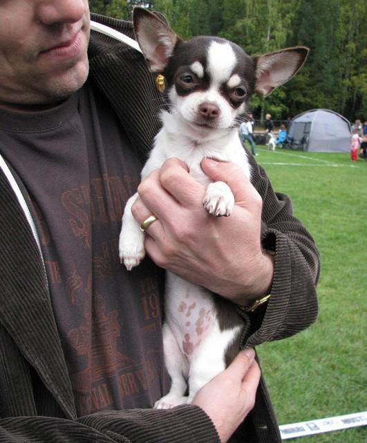 Lola BOB puppy Tampere