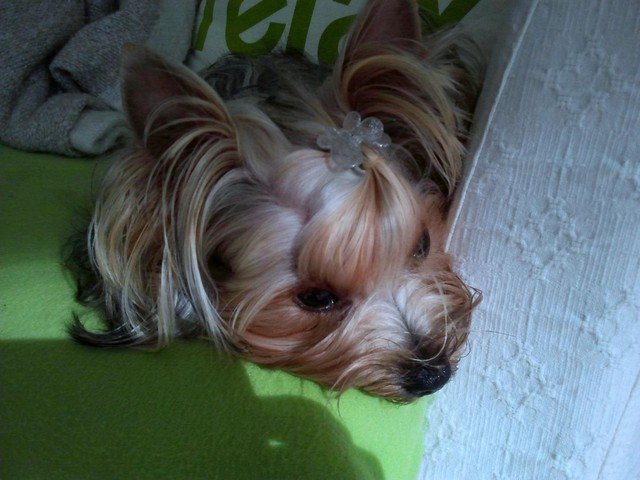 Magic Minidog Little Helmiina