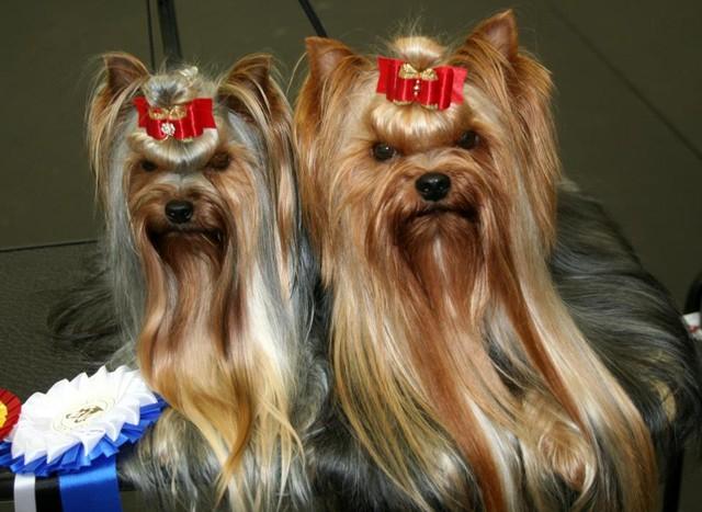 Maria & Dolce Rakvere Dogshow 21.10.12