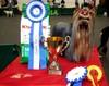 Maria BOB&New Estonian Champion& Best In Group 2 place Rakvere Dogshow