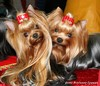 Sessi & Dolce Sweden International Dogshow