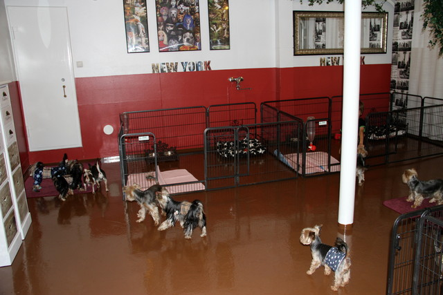 Koirien huone