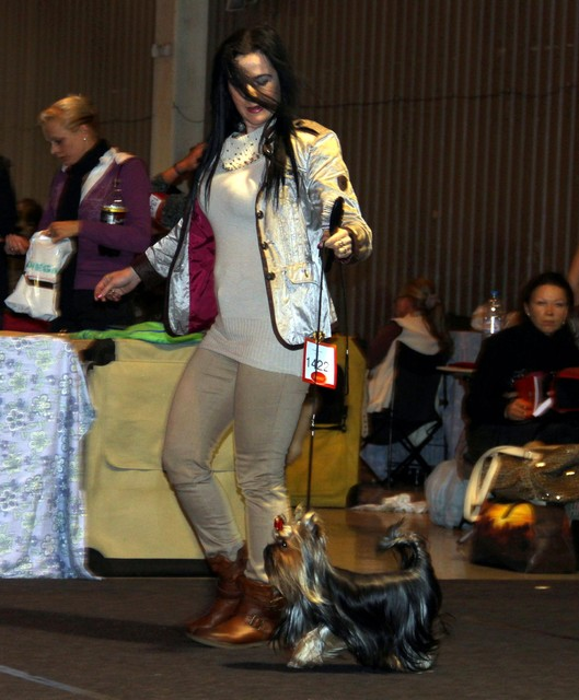 3.11.2013 Tartu International dogshow