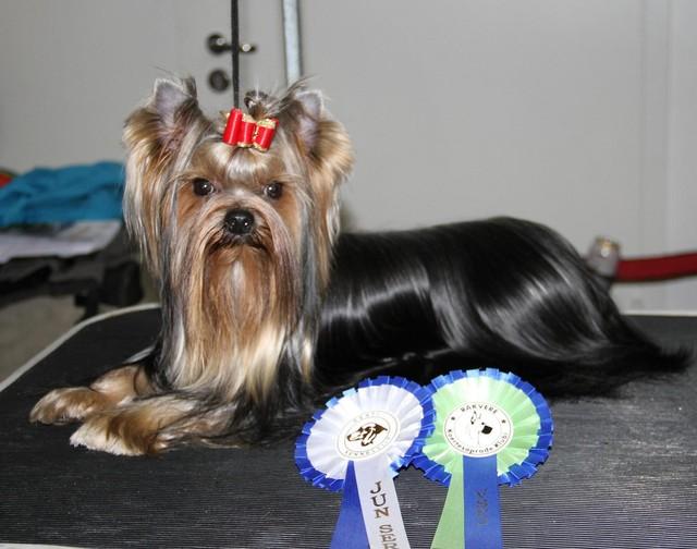 Capu first dogshow 19.10.13