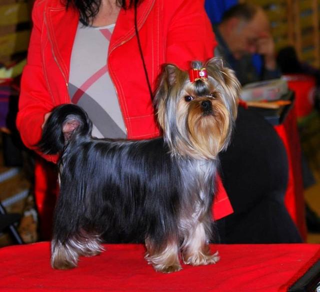Ruddy -1.12.2013 First Dogshow :Junior Class Winner