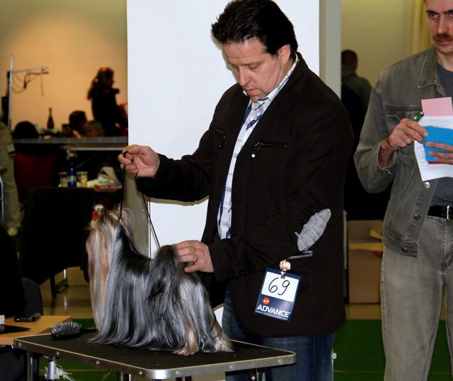 Grazy Angel Of Bregadoon Best Of Breed 8.02.14 Terrier Special Dogshow