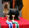 Ruddy -1.12.2013 First Dogshow :Junior Class Winner