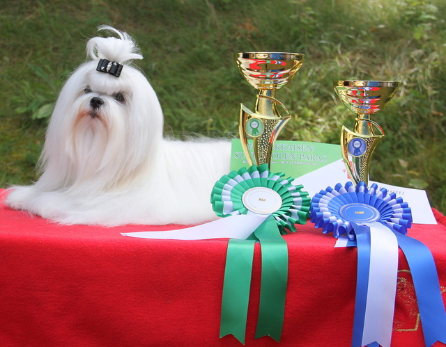 Jazz 1 years old -first dogshow in Finland. Best Male& CAC
