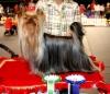 Elegant Baubles Double Delight 1,5 years old BOB Harjavalta Dogshow