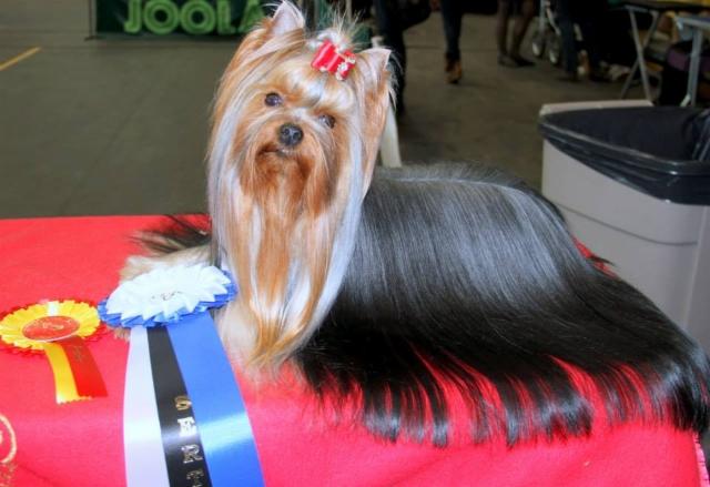 "Magic Minidog Follow Me Baby -""Baby"" 2 v"