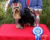 Fury Lahti International Dogshow -first time in intermedia class 1 st place & R.CACIB & R:CAC