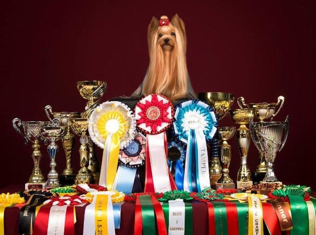 Multi Champion Declan`s Globetrotter