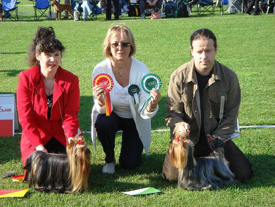 26-08-07_terrier_special_show.jpg