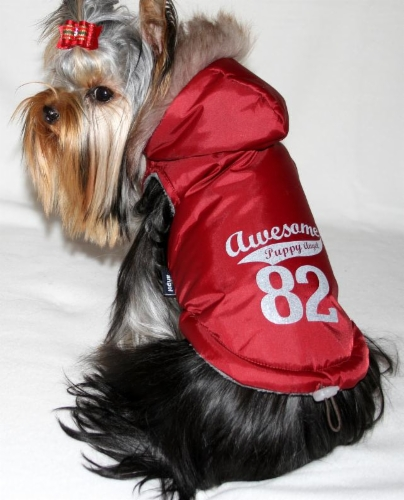 puppy_angel_awesome_winter_jacket.jpg&width=280&height=500