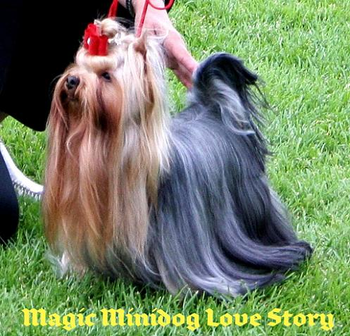 magic_minidog_love_story-1.jpg