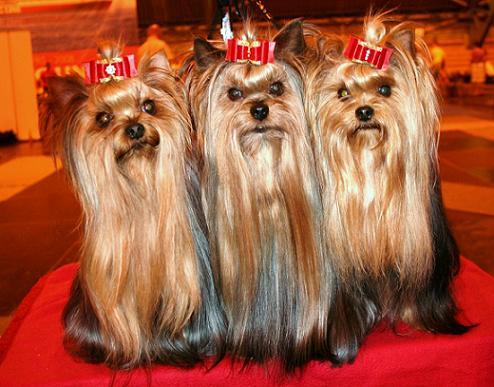 hiusmallit pyöreille kasvoille escort girls in helsinki