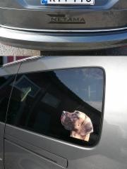 Auton pienet tarrat
