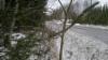 Picea abies 'Ikola's Dark Snake', tummaneulas käärmekuusi