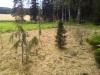 Kasviryhmä Mäkisenmäellä