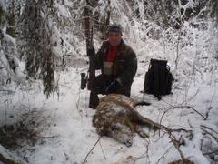villisikaa lumessa