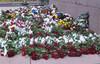 Latvia 18.11.2012: isänmaan ja vapauden puolesta