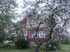 punainen tupa ja omenapuu