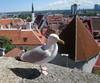 Tallinnan rohkee