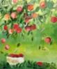 Omenasato, 2020 öljy kankaalle 54 x 65 cm